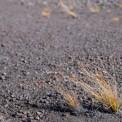 3379281-piccole-piante-che-crescono-su-terreno-arido